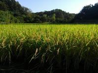 秋の舞岡公園と周辺の旅 #2 - 神奈川徒歩々旅
