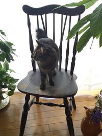 休日の過ごし方♪ - キッチンで猫と・・・