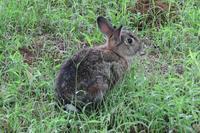 食事中のウサギさん。他、菖蒲田に咲く花など - ぶらり散歩 ~四季折々フォト日記~