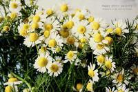 My favorite flower - Happy photo gallery Ⅱ