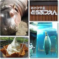 旭川初めての旭山動物園を探検 - おいしい~Photo Diary