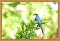 いつもの公園でサンショウクイとカワセミを鳥×撮り2020.09 - 鳥×撮り+あるふぁ~