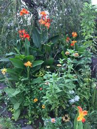 秋の四連休、秋色の庭の花。 - piecing・針仕事と庭仕事の日々