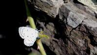 秋分雷乃収声(かみなりすなわちこえをおさむ) - 紀州里山の蝶たち