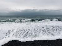 海岸散歩 - TACOSの野鳥日記