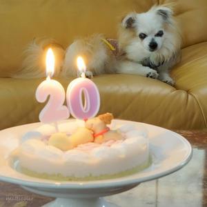 愛犬は20歳になりました♪ - きれいの瞬間~写真で伝えるstory~