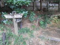 初秋散歩2) 野草園・ホタル園・カニ山のキャンプ場へ - のび丸亭の「奥様ごはんですよ」日本ワインと日々の料理