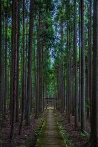 賀茂神社 - 鏡花水月