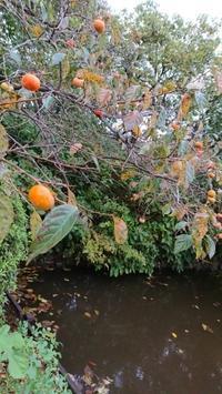 食欲の秋です - 川豊別館ブログ