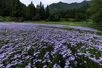 北山友禅菊咲く頃(左京区・久多) - 花景色-K.W.C. PhotoBlog