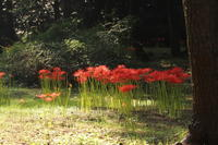 探鳥ポイントの秋 - 田舎のじーじのつぶやき