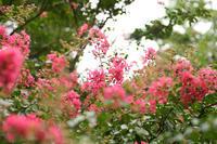 秋分の日 - 写真の記憶