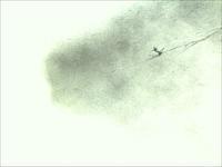《秋ヤマセミの谿》 - 『ヤマセミの谿から・・・ある谷の記憶と追想』