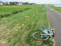 曼殊沙華の花も咲き始めました。 - 自転車走行中(じてんしゃそうこうちゅう)