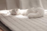 転寝 - Omoブログ