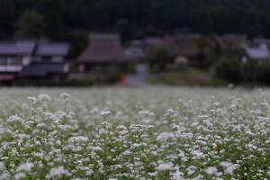 美山かやぶきの里 - 京都写真(Kyoto Photo)