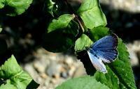 秋分雷乃収声その2 - 紀州里山の蝶たち