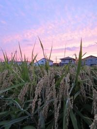 季節を分ける夕暮れ空 - タビノイロドリ