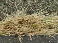 実りの秋 - hibariの巣