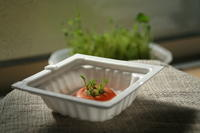 窓際の野菜クズたち - Bd-home style