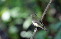 MFの森での水場の賑わい - 私の鳥撮り散歩