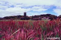 クロスプロセス備中国分寺の赤米 - 下手糞でも楽しめりゃいいじゃんPHOTO BLOG