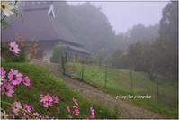 秋桜のお爺さんの家 - 今が一番