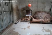 2020年8月天王寺動物園その2 - ハープの徒然草