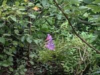 夏水仙と薔薇ボレロ - いととはり