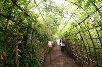 萩のトンネル - summicron