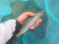 2020年9月のシルバーウィークの友釣り - 川と海と友