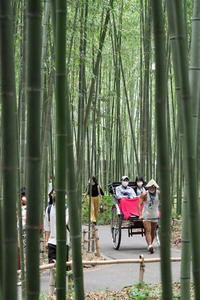 竹林…人力車のある光景④ - Taro's Photo