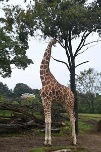 背伸び - 動物園へ行こう