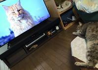 テレビっ子♪ - *てんてんらんこ* 次はどこ行く?何食べよう♪