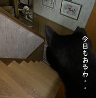 はるとさくらとくりちゃん - gin~tetsu~nosuke