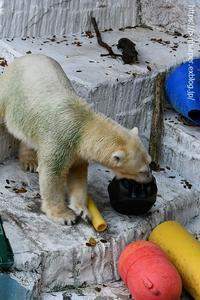 2020年8月天王寺動物園その3 - ハープの徒然草