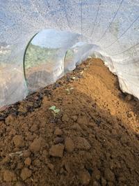キャベツとブロッコリー - 週末農夫コーディーのイケてる鍬の振るい方
