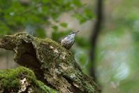 2020-163 水浴び後のゴジュウカラ - 近隣の野鳥を探して2