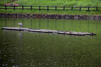 池の鳥 - 駄猫と本の部屋 ぶらん亭