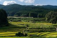 稲と近鉄特急 - toshi の ならはまほろば