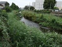 黒目川わきの水路 - ひのきよ