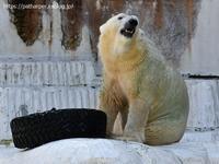 2020年8月天王寺動物園その4 - ハープの徒然草