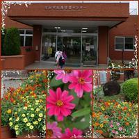 「流山学習センター」で勉強会(^^♪ - ポポの日記と花とドライブ