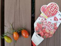 トマト終了と、土になれるか実験 - 0ri0ri's備忘録