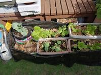 意外と順調?袋栽培とプランターで葉物野菜 - 0ri0ri's備忘録