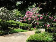 最後の夏の花:百日紅 - park diary