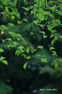 小雨降る日の桜花亭の庭園を探訪。 - 一場の写真 / 足立区リフォーム館・頑張る会社ブログ