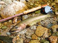 202008 梅雨の恵み♪ - 森と山と渓魚(フライフィッシングで渓流を満喫してます!)