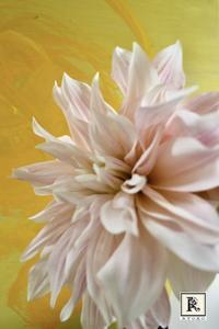 大きなダリアの名前 - Bouquets_ryoko
