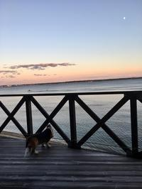 定刻パトロール - 湖畔に暮らすミュージシャンと愛犬ハンク/ターシャの日記